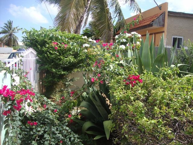 jardim da casa da minha sogra
